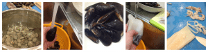 Garganelli al profumo di mare 1